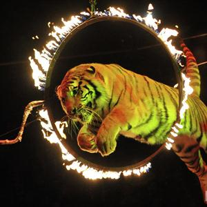 Цирки Одоева