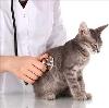 Ветеринарные клиники в Одоеве